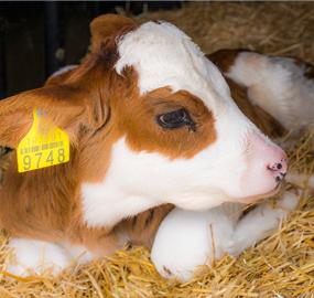 Rumeli Hayvancılık Tarım Gıda ve En…
